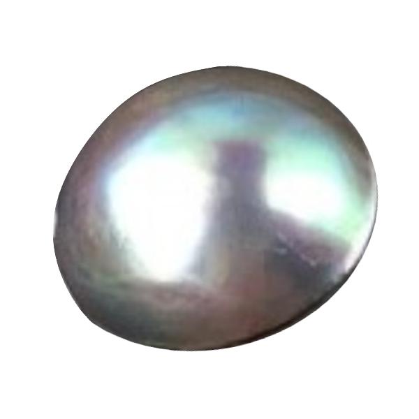 アワビ養殖半形真珠