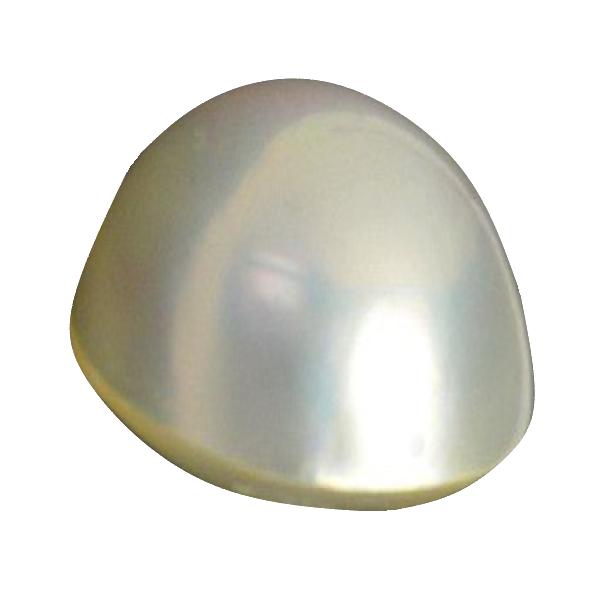 マベ養殖半形真珠